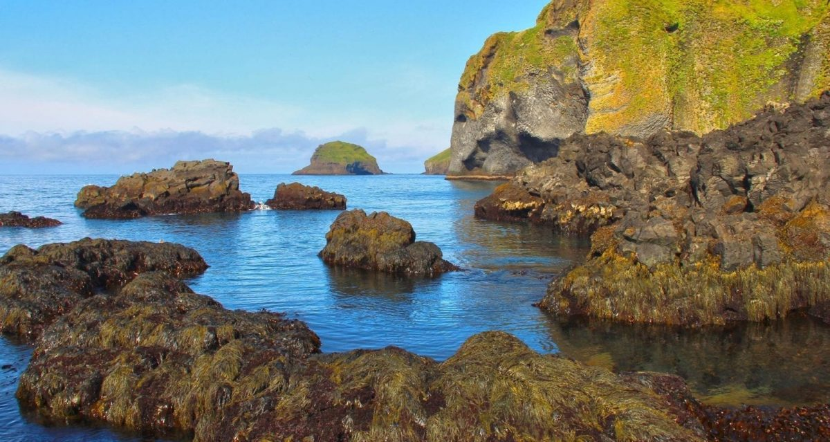 the Elephant in the sea - Visit Westman Islands